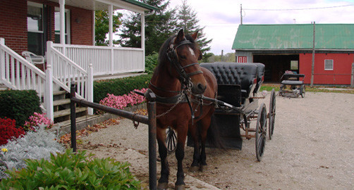 A Mennonite Buggy waiting to take guests on a ride.